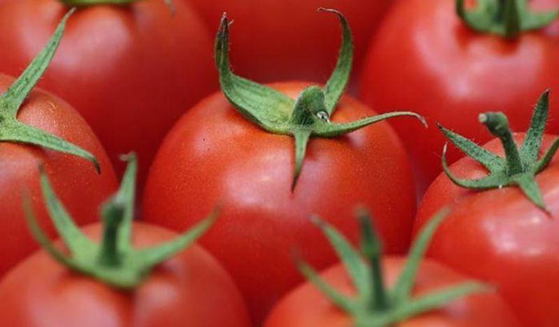 <p> आपल्यापैकी बरेचजण टोमॅटो फ्रीजमध्ये ठेवतात. अजिबात करत नसताना. टोमॅटो फ्रीजमध्ये ठेवल्याने ते द्रुतगतीने वितळतात. आपण त्यांना आनंदी ठिकाणी ठेवले पाहिजे. मग ते बर्याच काळासाठी सत्य राहतील </ p>